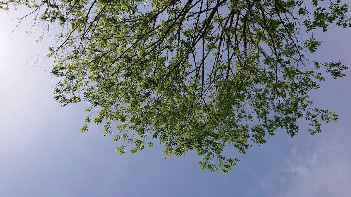 木陰で寝転びながら見た景色